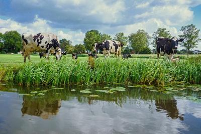 Het eten in Friesland
