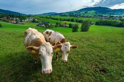 Het eten in Oostenrijk